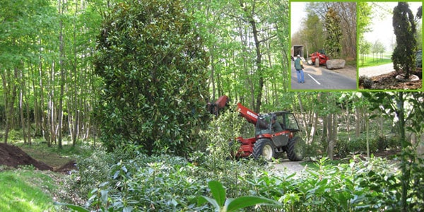 Fournitures et plantation arbres et arbustes à Rambouillet
