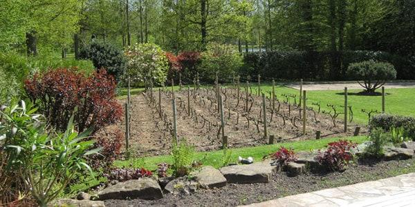Aménagement extérieur à Rambouillet, Yvelines 78 : Création d'une vigne